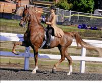 """horse show with """"TC"""""""