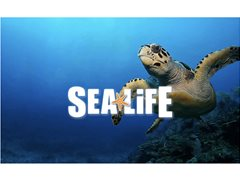 Sea Life! Actors and Models wanted