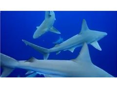 NEW TV DOCO looking for Shark Loving Experts