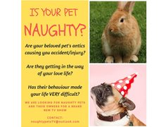 Naughty Pets & Their Owners Wanted for TV Show