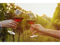 Photo and Video Tourism Content Shoot – Wine Regions