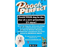Could Your Dog Be The Star of Our New Primetime BBC One Show?