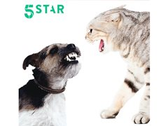 Problem Cats and Dogs Needed for New 5 Star Series