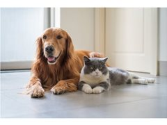 RSPCA Pet Insurance TVCs, Must Love Cats & Dogs! up to $650 - $1700
