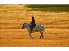 Horse Riders and Equine Talent Wanted