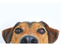 Actors Required for Pet Insurance Commercial - £900