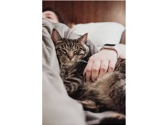 Cat Parent Needed for Online Brand Film - earn up to $1900!