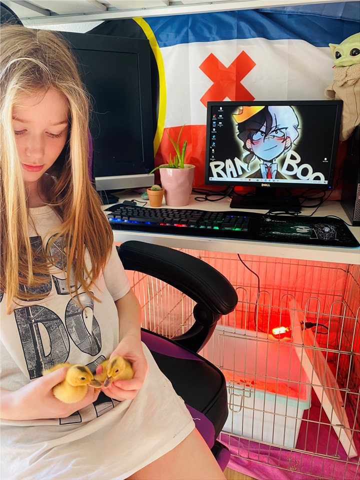 My 11 year old with her ducklings