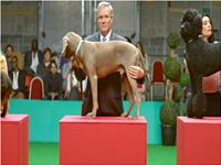 Will Young, Come on, Music, Video, Chris Wilson, Weimaraner, TV, Comedy, Dog Show, William, Singer,