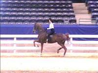 practicing for horse show